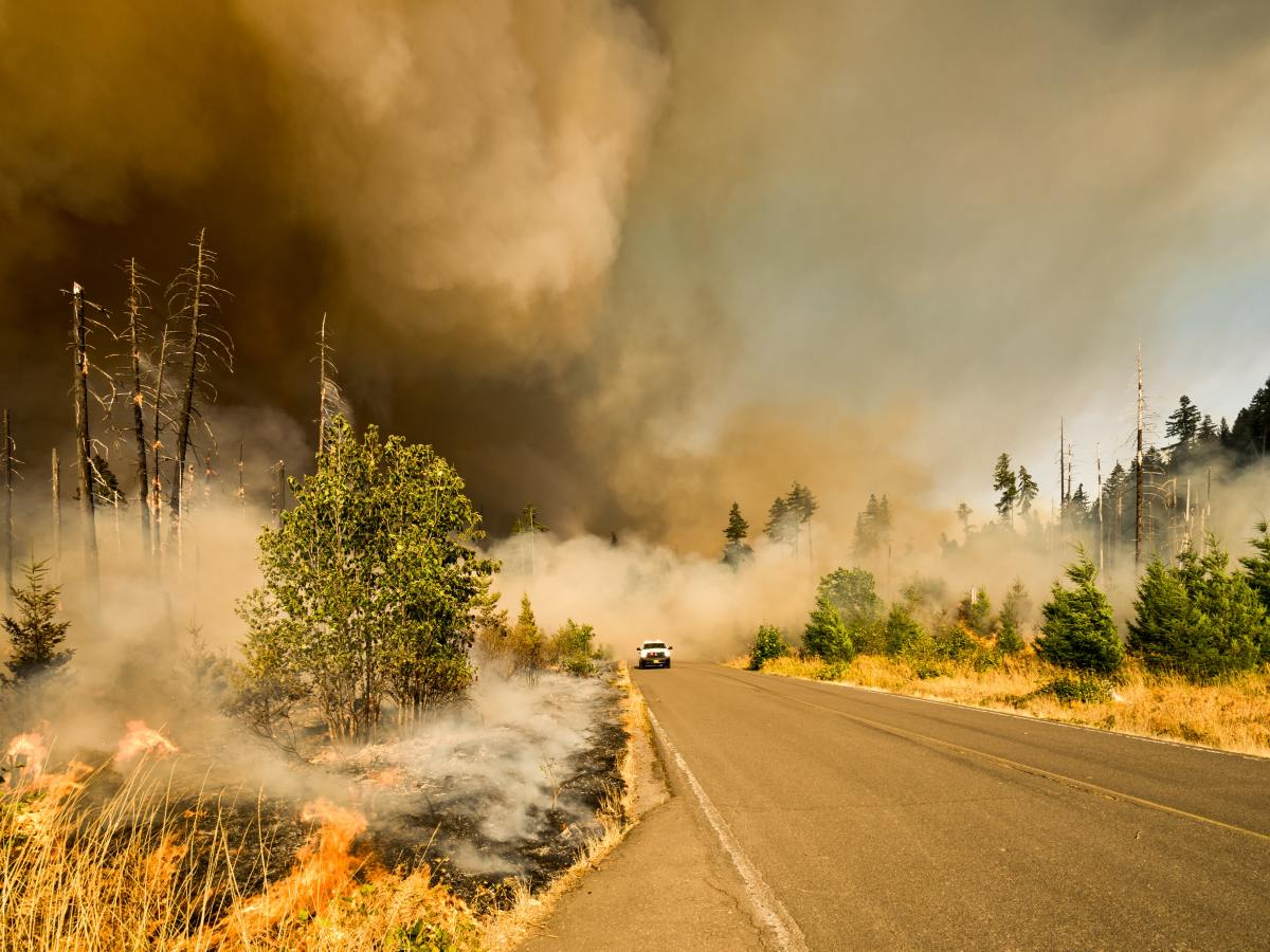 Wildfire burning on the side of a street